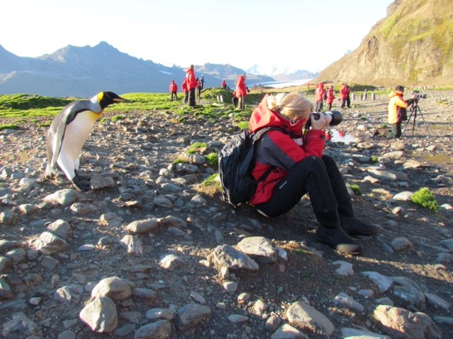 Darlene Knott takes photo while penguin looks over shoulder.